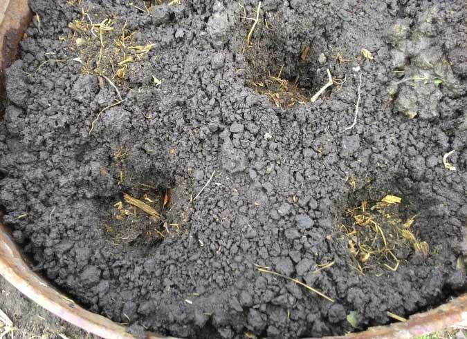 Высаживать семена огурцов нужно на расстоянии в 10-15 мм