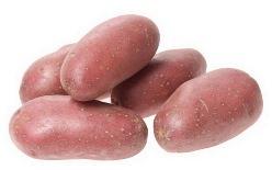 Картофель «Розана» неслишком требовательный сорт