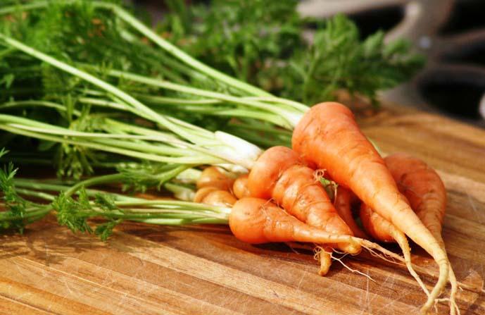 Ранние сорта моркови созревают уже на 65-90-й день