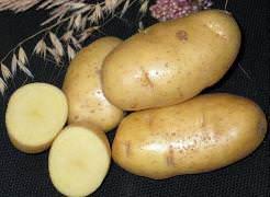 Картофель «Чародей» среднеранний сорт столового назначения