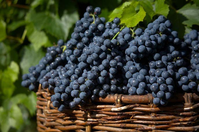 «Загадка Шарова» прекрасно сохраняет свои товарные и пищевые качества при длительном хранении