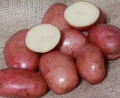 Картофель «Ред леди» пригоден для длительного хранения