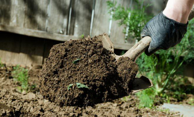 Перекопка грунта – классический вариант, применяемый на грубой, склонной к закисанию земле