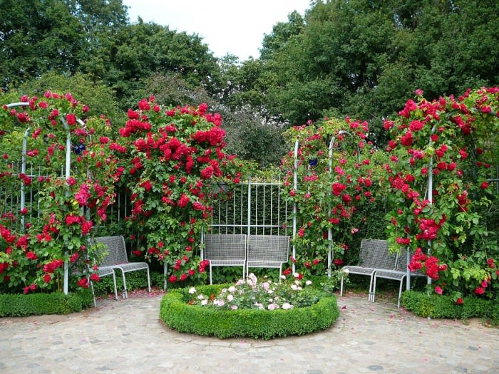 Шпалеры для роз: сложная, но надежная конструкция