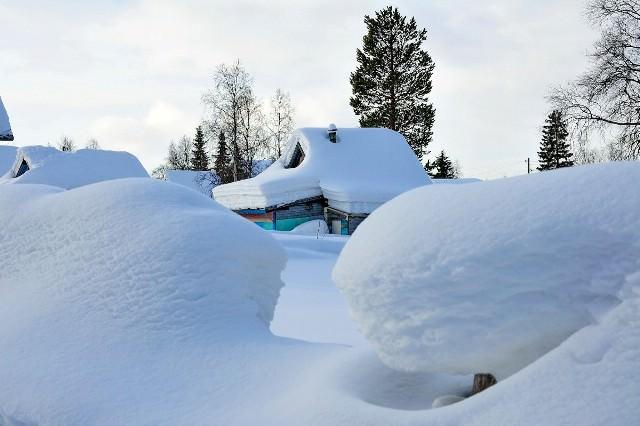 Снег – равномерный слой, каждое прикосновение к которому оставляет определенные следы. Поэтому можно очень просто идентифицировать вредителей, которые проникли в заснеженный сад