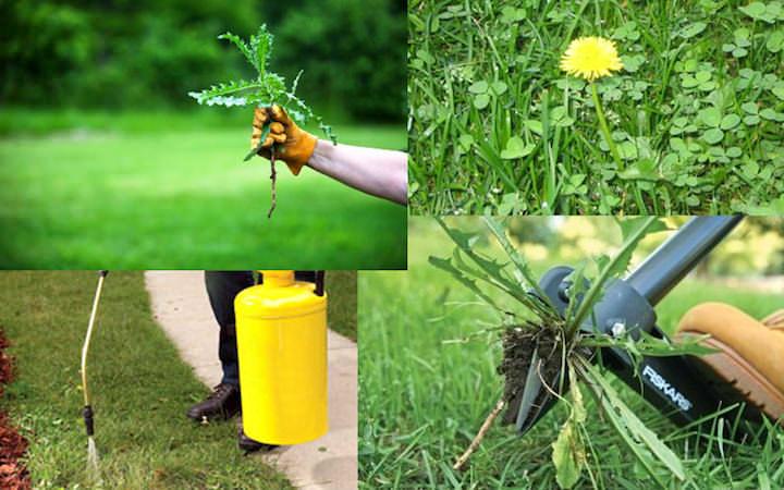 Если вы решили использовать химические средства для уничтожения сорняков, удостоверьтесь в правильности выбора