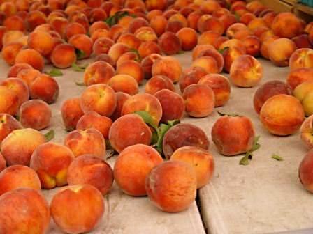 На сорта персика следует обратить особое внимание, ведь от правильного выбора сорта и будет зависеть вкус плода и урожайность дерева