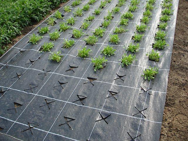 Структура нетканого полотна способна к пропусканию света, воздуха и влаги, создавая при этом требуемый микроусловия для уверенного роста растений
