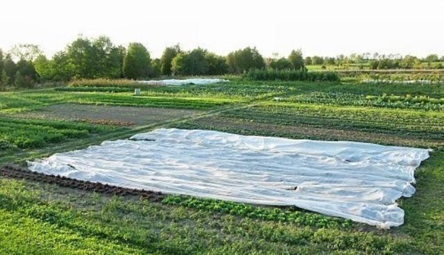 Укрывное полотно применяется на протяжении всего этапа вегетации плодоносов