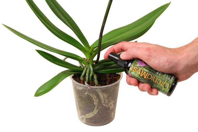 Внекорневое выполнение подкормки для орхидеи применяется в качестве альтернативного варианта