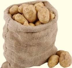 Картофель «Тимо» – раннеспелый сорт столового назначения