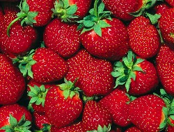 Лучшие сорта клубники для выращивания на даче в 2018 году
