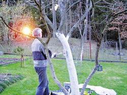 осенняя обработка деревьев, защита коры
