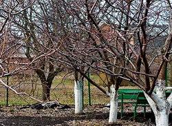уход за садом осенью, плодовые деревья