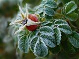 Способы защиты растений от заморозков