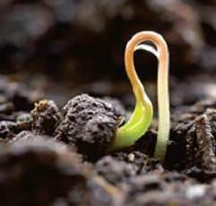 Грамотный садовод должен знать, что такое стратификация и как ее правильно проводят