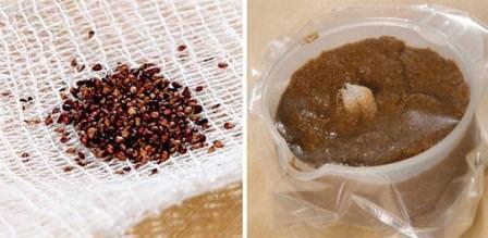 Стратификацией называют один из методов, способствующих лучшей всхожести семян