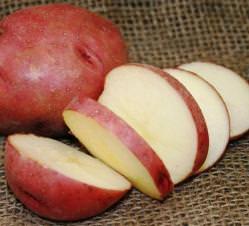 Картофель «Рокко» относится к среднеспелым сортам