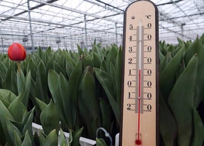 Температура в теплице — важный фактор стабильности и качества урожая