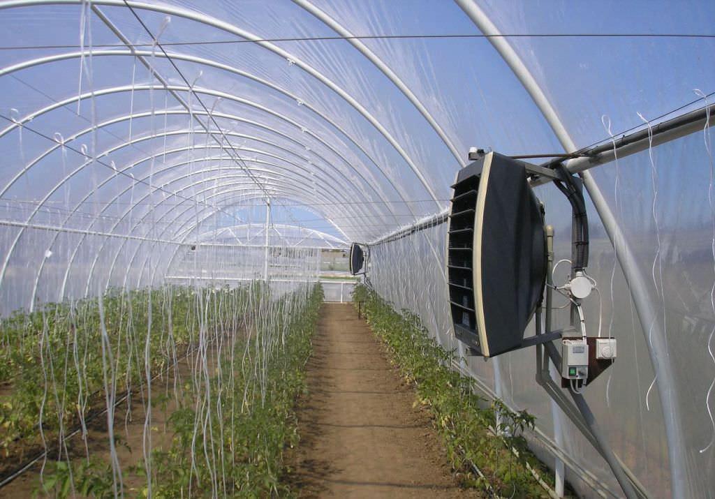 Правильной температурой для выращивания помидор в теплице считается +20+22°С