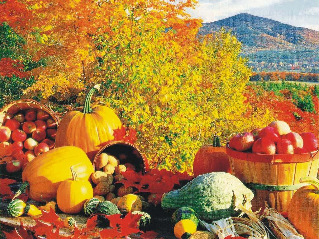 Подготовка теплицы к осени, обработка каркаса и грунта – очень важные процессы, которые способны не только продлить срок службы теплицы, но и помочь в выращивание качественных культур каждый год