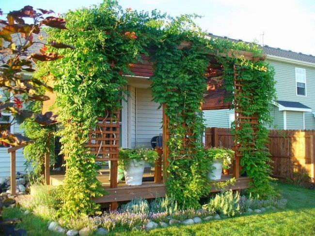 Растения с лиановидной надземной частью популярны во многих странах