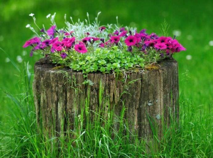 Дупло может быть использовано в качестве естественных условий для посадки декоративных растений