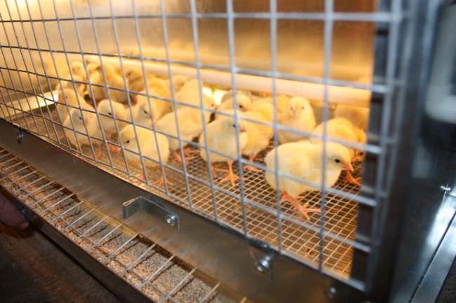 Брудер для цыплят своими руками чертежи