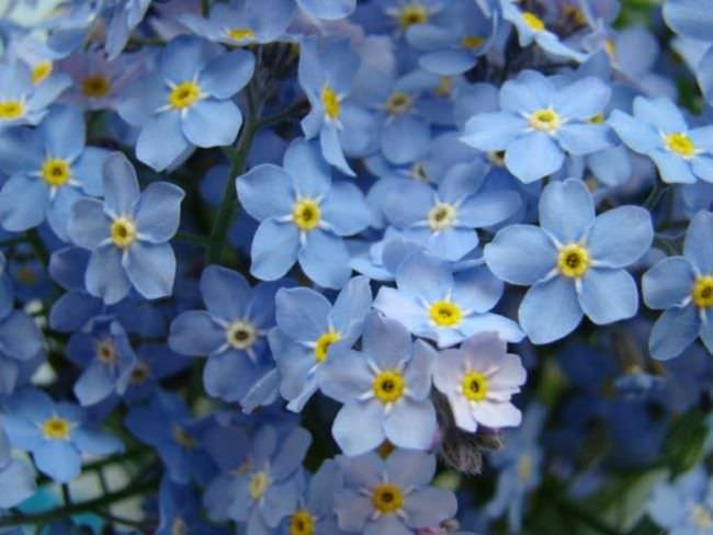 Самые красивые декоративные растения активно распускают бутоны в июле