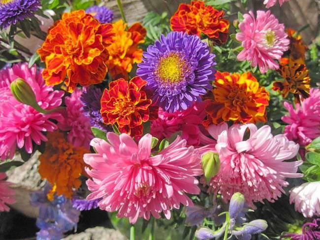 Цветы осенние