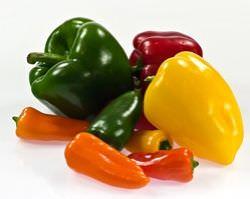 Болгарский перец: выбор сорта полезного овоща и правила его выращивания в открытом грунте