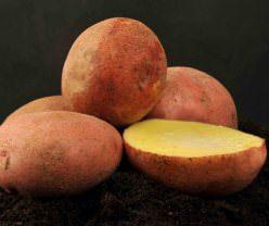 Картофель «Журавинка» относится к скороспелым столовым сортам