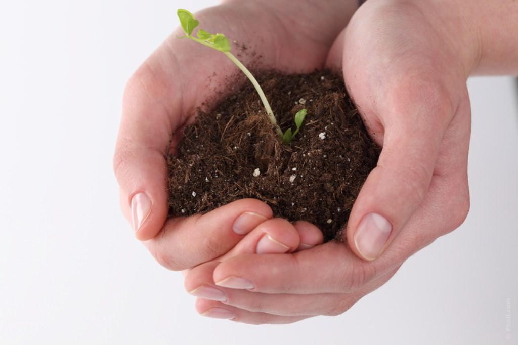 Томаты выращиваются на грунтах, состоящих из смеси нескольких компонентов. Грунт должен быть пористым (до 70-75%), с наименьшей влагоемкостью около 50%, воздухоемкостью 20-25%, плотностью — 0,4-0,6 г/кв. см.