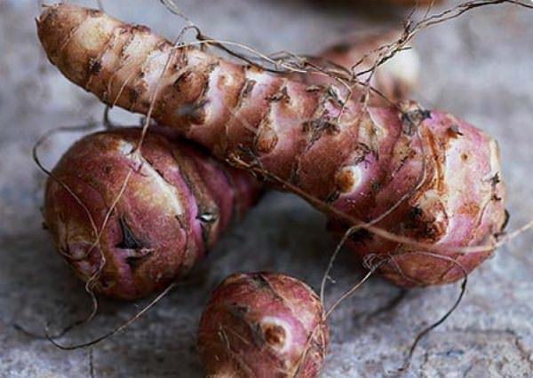 Правильная агротехника топинамбура поможет вырастить отличный урожай на даче