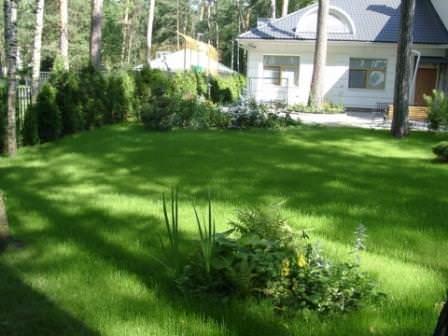 Свойства газонной травы