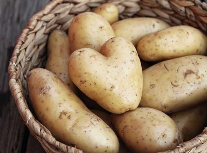 Для выращивания в мешках идеально подойдут среднеранние и ранние сорта картофеля