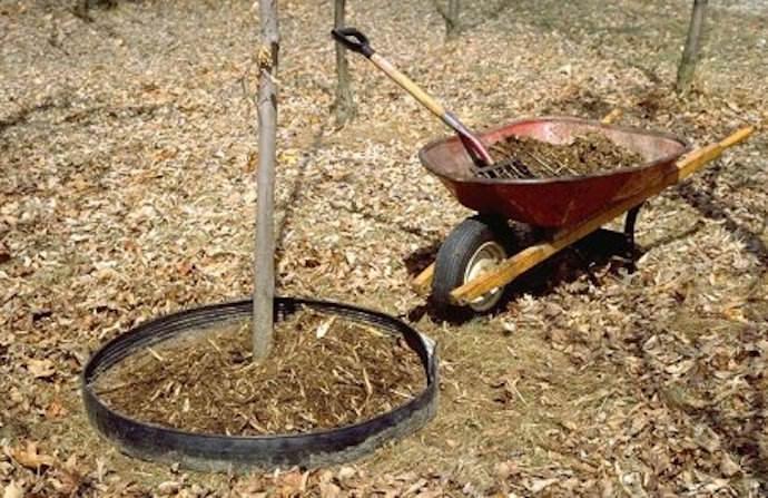 Удобрение деревьев куриным пометом и последующее мульчирование для сохранения свойств почвы