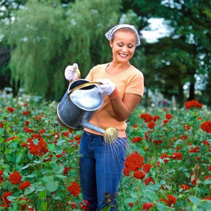 Вы должны постоянно ухаживать за почвой вокруг розовых кустов: рыхлить ее, удобрять и поливать, мульчировать, обрабатывать дезинфекционными средствами, постоянно следить за чистотой