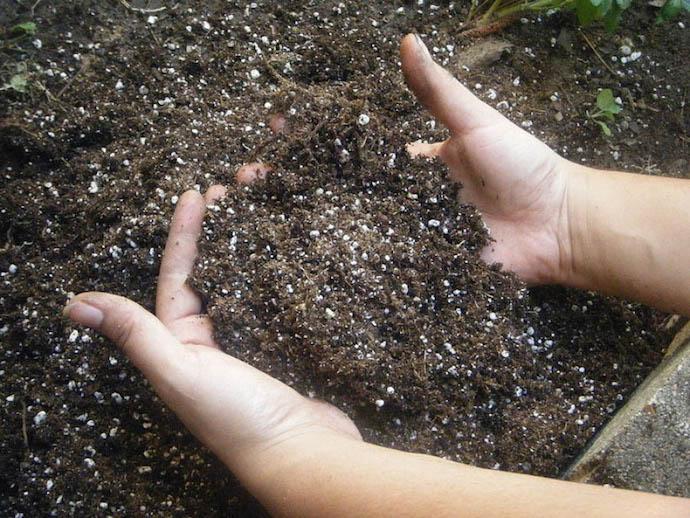 Почва должна быть чистой и плодородной, без сорняков и лишних растений поблизости