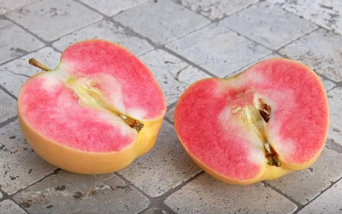 Плоды яблони «Розовый жемчуг» характеризуются мелкой зернистостью и очень интересной мякотью ярко-розового цвета