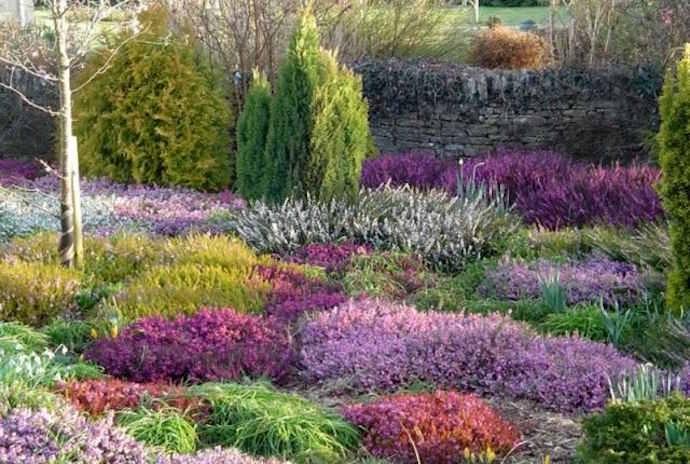 Требования у всех вересковых и брусничных растений к почве примерно одинаковы