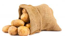 Картофель Винета пользуется повышенным вниманием картофелеводов
