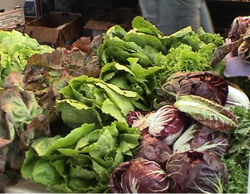 Разнообразные по форме и листьев и окраске, эти однолетние быстрорастущие овощи в основном используют в свежем виде