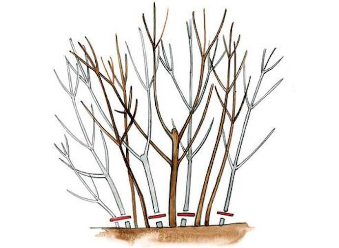 Приступайте к методу до того, как вода начнет активно перемещаться внутри ствола: ранней весной либо поздней осенью
