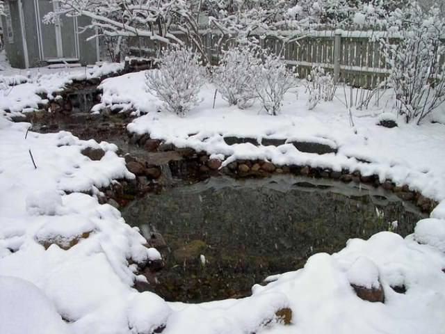 Из маленького, неглубокого водоема, где площадь не более 20 м², а глубина менее 0,8 м, воду обязательно выкачивают, так как она полностью замерзнет