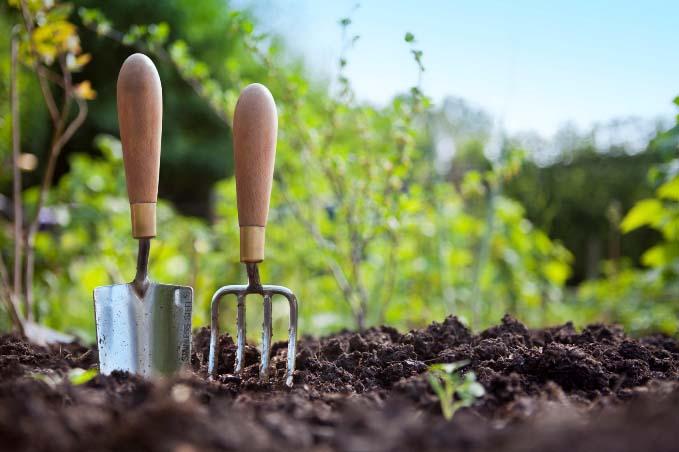 Залогом правильного развития и формирования мощных растений является своевременное удаление сорных растений