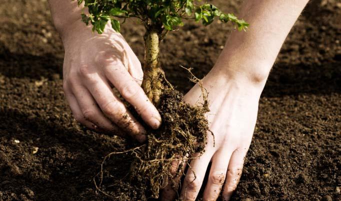 В апреле рекомендовано осуществлять посадку кустарников и деревьев, обладающих открытой корневой системой