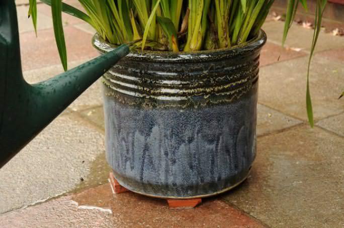 Корневое внесение удобрения предпочтительно для уже взрослых и полностью сформировавшихся комнатных растений