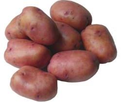 Картофель «Рябинушка» – высокоурожайный сорт