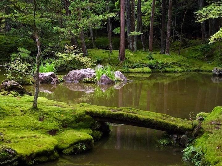Как правило, в японском саду используются мхи и небольшие декоративные растения с мелкими цветочками
